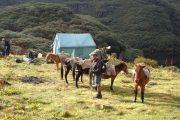 Bhutan - Druk Path trekking - Paarden