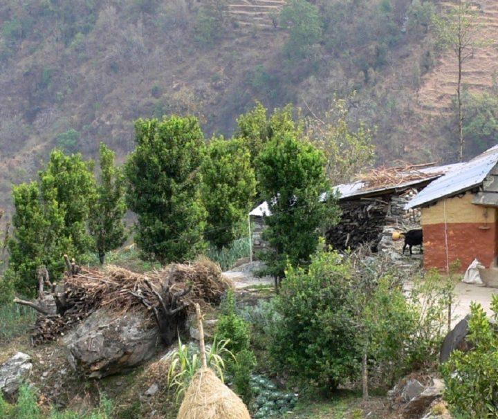 Nepal - Helambu trekking