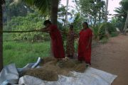 India Kerala Alleppey Locals dorsen de rijst