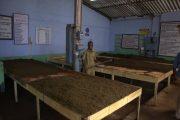 India Kerala Munnar Theefabriek binnenzijde
