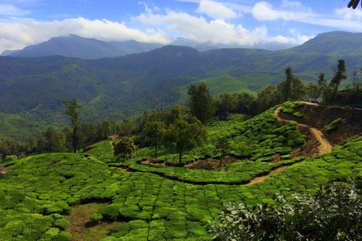 Munnar Theeplantages uitzicht