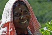India Kerala Munnar Theeplukker