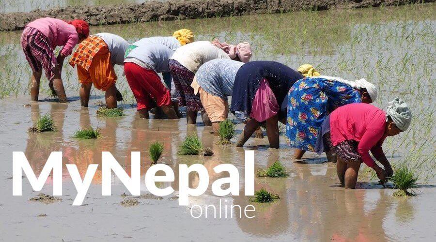 MyNepal.online