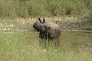 Nepal - Bardia Nationaal Park - Neushoorn