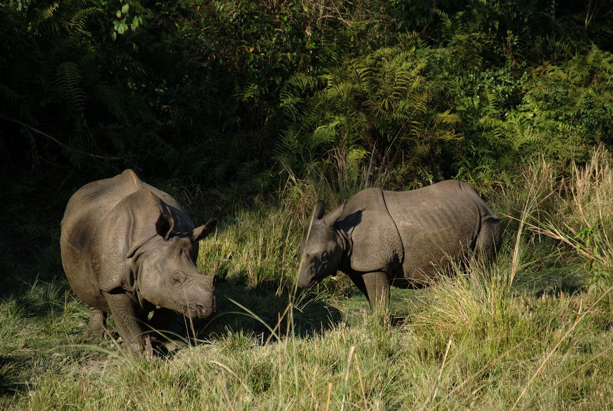 Nepal - Chitwan Nationaal Park - Neushoorns