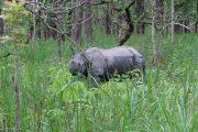 Neushoorn in Chiwan Nationaal Park Nepal