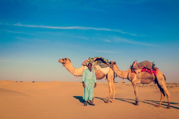 Kamelen in woestijn bij Jaisalmer in Rajasthan